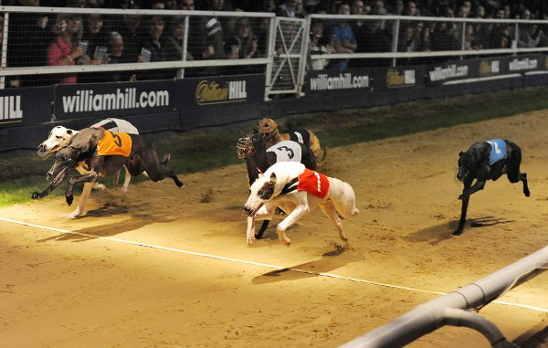 Racing again: The Greyhound Derby begins this month
