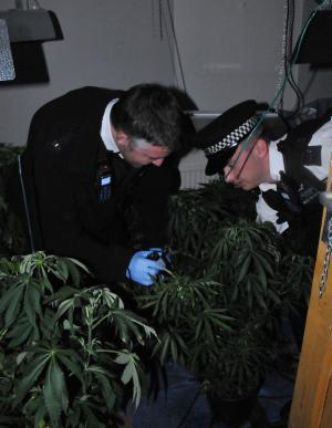 Officers with the stash of plants