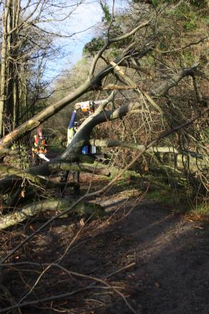 More trees could come down this weekend