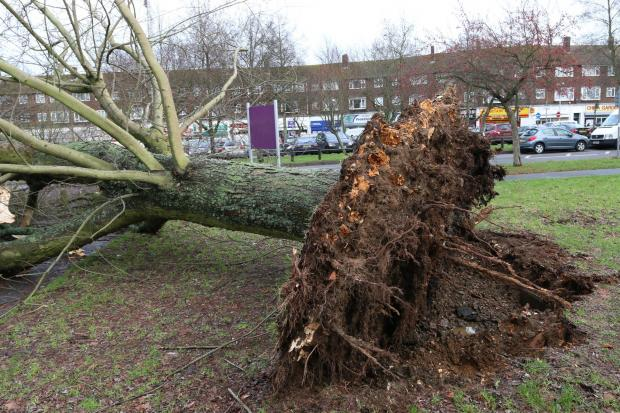 Croydon Guardian: Croydon Council chopped down 1,703 trees over three years