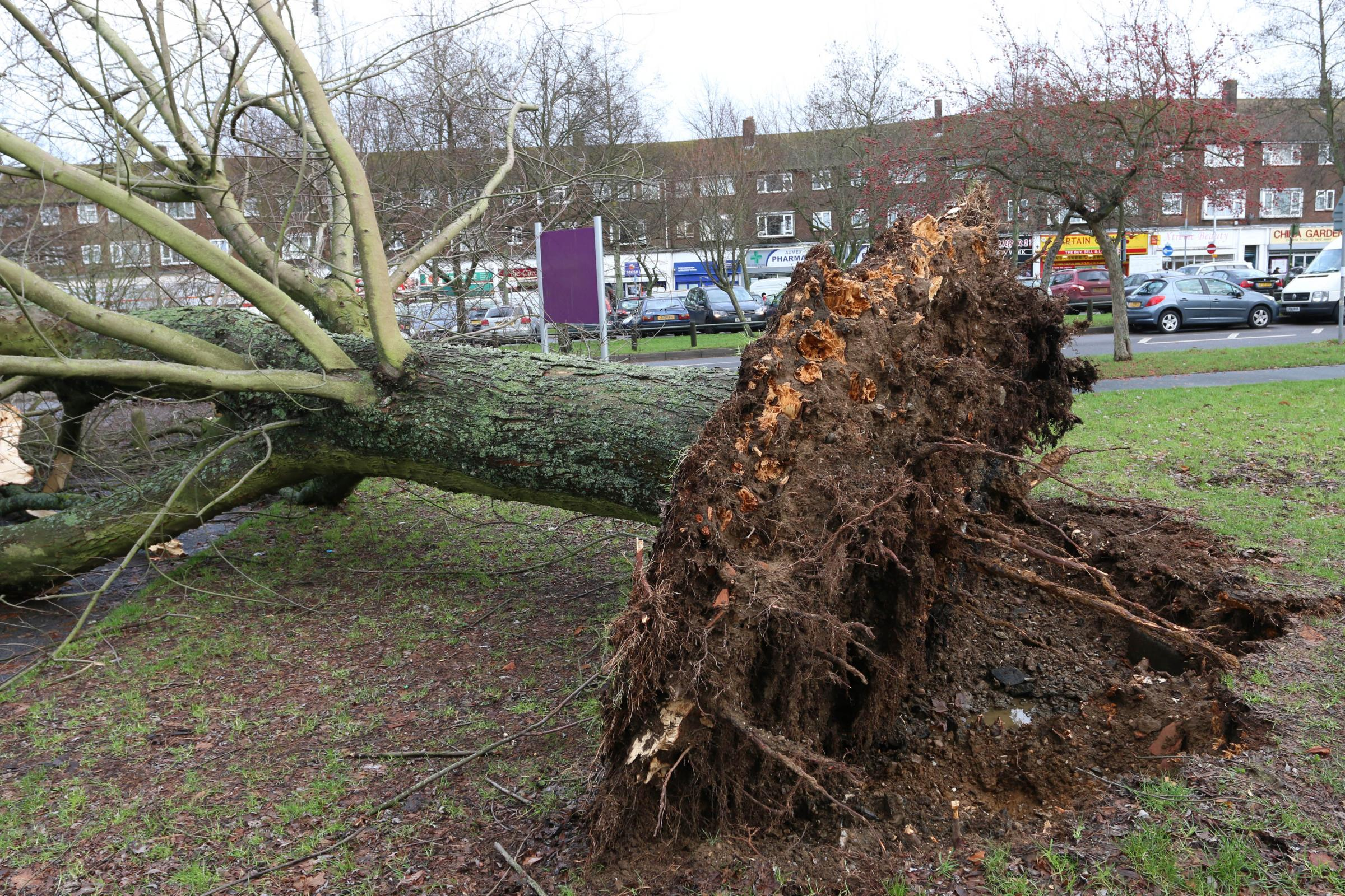 A felled tree outside New Addington leisure centre - one of 324 torn down last week