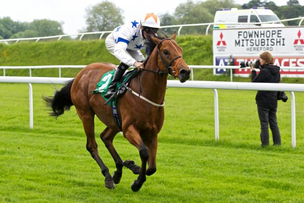 ONE TO WATCH: Majestic Hero is going for glory at Royal Ascot. Picture: Johnny Hathaway