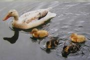 Nature Notes: Five little ducks