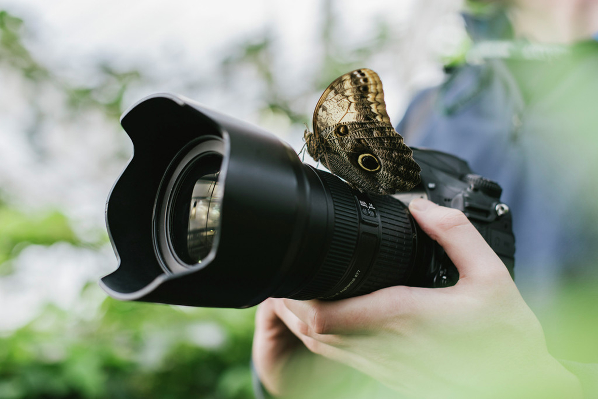 Butterfly Photography morning