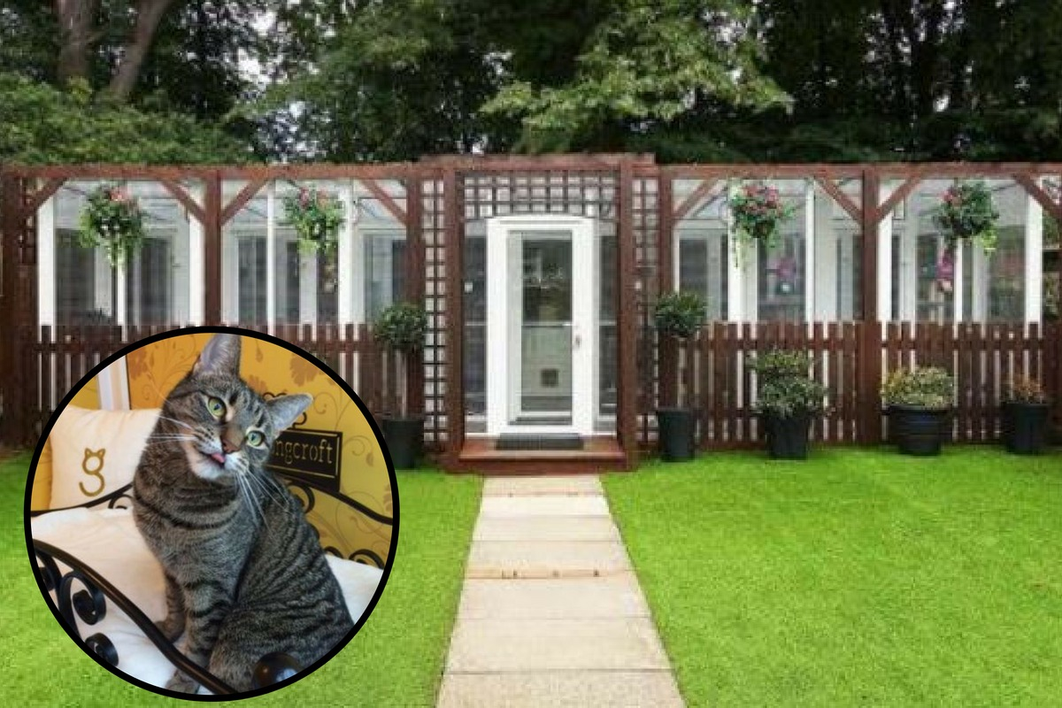 Cat hotel opening in Croydon this week