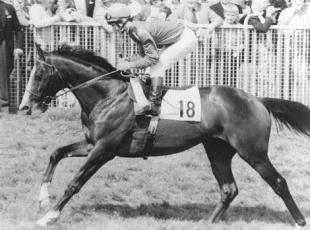 Croydon Guardian: MISSING: Shergar was kidnapped in 1983